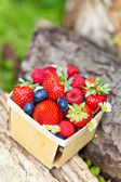 Fresh Berries in a basket — Stock Photo
