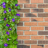 Brick wall with flowers — Stock Photo