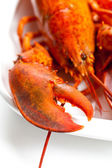 Lobster. Macro. — Stock Photo