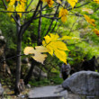 Stock Photo: Yellow leaves