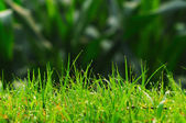 The dew in the grass — Stock Photo