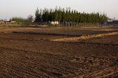 Morninghope of land — Stock Photo