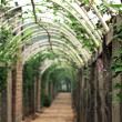 Stock Photo: Vegetables corridor