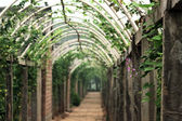 Vegetables corridor — Stock Photo