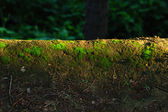 Moss under the sun — Stock Photo