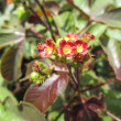 Twinkling edges of beautiful red flower plant and leaves in garden — Foto de Stock
