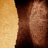 Combined leather texture — Stock Photo