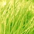 Grass background — Stock Photo #31067157