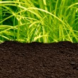 Stock Photo: Grass and soil