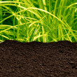 Grass and soil — Stock Photo