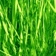 Grass background — Stock Photo #35150665