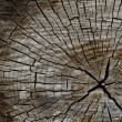 Texture of the old tree - Stock Photo