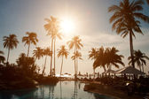 Silhouettes of palm trees on sunset — Stock Photo