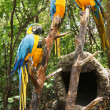 Parrots in the forest — Stock Photo