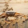Stock Photo: Big crab