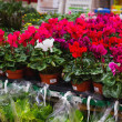 Stock Photo: Flower market