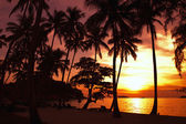 Palm trees  by sunset — Stock Photo