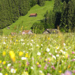 Alps meadow — Stock Photo