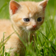 Kitten — Stock Photo #13211349