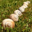 Snail shells - Stock Photo