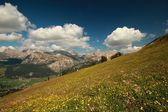 Dolomites - Blooming Meadow — Stock Photo
