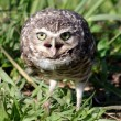 Furious owl — Stock Photo #12604583