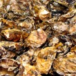 Oyster shells — Stock Photo