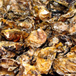 Stock Photo: Oyster shells