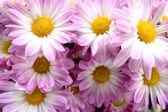 Floriculture — Stock Photo