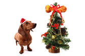 Dog's Christmas tree with bone on the top — Stock Photo