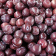 Plums — Stock Photo #13362064