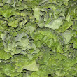 Foto de Stock  : Collard greens