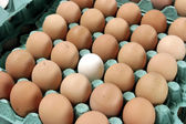 Different Egg — Stock Photo