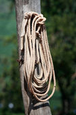 Hung rope close-up — Stock Photo