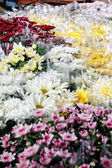 Floriculture — Stock Photo