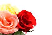 Kolorowe róże — Zdjęcie stockowe