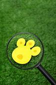 Pista de conejito de pascua huevos de caza — Foto de Stock