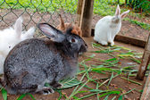 Rabbits in cage — Stock Photo