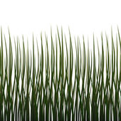 Isolated grass (Seamless texture) — Stock Photo