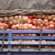 Stock Photo: Transporting onions