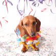 Dog's party - Stock Photo