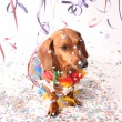 Carnival canine party - Stock Photo