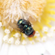 Fake flower real fly — Stock Photo