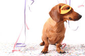 Carnival dog — Stock Photo