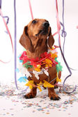 Karneval-dog-party — Stockfoto