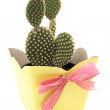 Cactus yellow gift — Stock Photo