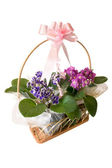 African violet basket gift — Stock Photo
