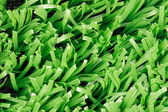 Close up of synthetic grass texture — Stock Photo