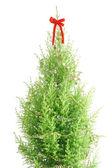 Pine tree decorated — Stock Photo