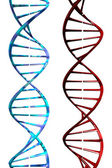 DNA (3D) — Stock Photo